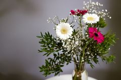 Den nya börjanbuketttusenskönan blommar lojal förälskelse för vita röda kronblad royaltyfria bilder