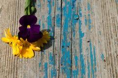 Den nya calendulaen blommar och violets på det gamla träbrädet som målas med blåttmålarfärg som flagar Arkivbilder
