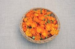 Calendulaläkarundersökningen blommar i ond korg Fotografering för Bildbyråer