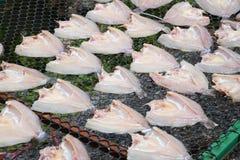 Den nya fisken på plast- förtjänar under solljus för gör den torkade fisken Arkivbild