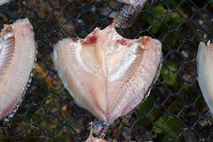 Den nya fisken på plast- förtjänar under solljus för gör den torkade fisken Arkivbilder