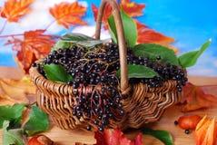 Den nya fläderbäret bär frukt i korgen fotografering för bildbyråer