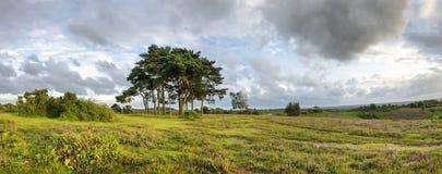 Den nya Forest Evening Fotografering för Bildbyråer