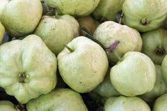 Guavafrukt. Arkivbild