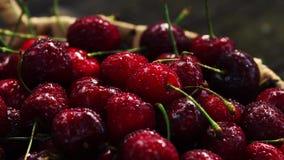 Den nya körsbäret med vatten tappar på mörk bakgrund nya bakgrundsCherry sund begreppsmat stock video