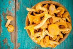 Den nya kantarellen plocka svamp i en bunke på en träbakgrund Arkivfoton