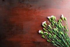 Den nya nejlikan blommar på abstrakt bakgrund av en trätabell Arkivbilder