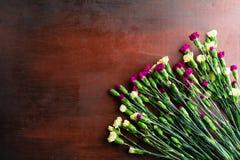 Den nya nejlikan blommar på abstrakt bakgrund av en trätabell Arkivfoto