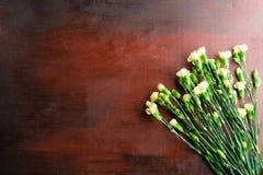 Den nya nejlikan blommar på abstrakt bakgrund av en trätabell Arkivfoton
