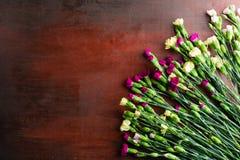 Den nya nejlikan blommar på abstrakt bakgrund av en trätabell Fotografering för Bildbyråer