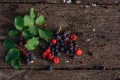 Den nya och mogna shadberryen, hallon med filialen, sidor spridde på den red ut trätabellen i trädgård Fotografering för Bildbyråer