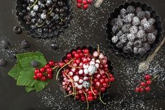 Den nya röda och svarta vinbäret, svarta hallon som efterrättgarneringsocker pudrar, förgrena sig den röda vinbäret i syrlig plat Fotografering för Bildbyråer