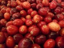 Den nya röda tranbärcloseupen, får dina antioxidants arkivfoton