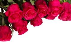 Den nya rosa färgen blommar tätt upp Arkivbilder