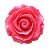 Den nya rosa ron knäppas Royaltyfri Fotografi