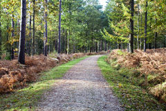 Den nya skogen Arkivbild