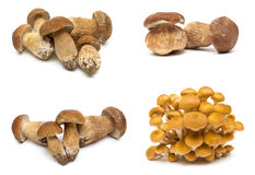 Den nya skogen plocka svamp på en vit bakgrund Arkivfoton