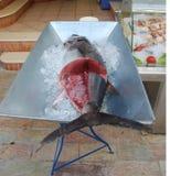 Den nya tonfisken i isen arkivfoto