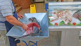 Den nya tonfisken i isen arkivbilder