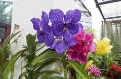 Den nya trädgården blommar från trädgård Arkivfoto