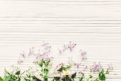 Den nya tusenskönalilan blommar och gör grön på vit trälantlig baksida Arkivbild