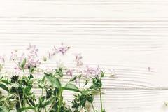 Den nya tusenskönalilan blommar och gör grön på vit trälantlig baksida Arkivfoto