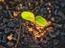 Den nya växten växer arkivbilder