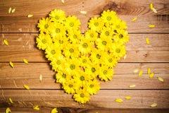 Den nya våren blommar i hjärtaform bland kronblad på lantligt grungeträ Royaltyfri Fotografi