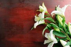 Den nya vita liljan blommar på abstrakt bakgrund av en trätabl Royaltyfria Bilder