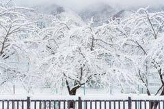 Den nya vita snönedgången på offentligt parkerar i vintersäsong Royaltyfri Fotografi
