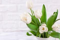 Den nya vita tulpan blommar buketten framme av den vita tegelstenväggen Fotografering för Bildbyråer