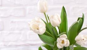 Den nya vita tulpan blommar buketten framme av den vita tegelstenväggen Arkivfoto