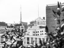 Den nya Yorkeren Arkivfoton