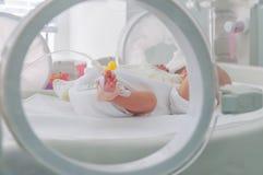 Den nyfödda oskyldiget behandla som ett barn att sova i en kuvös Arkivfoton