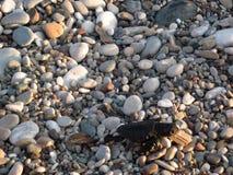 Den nyfödda sköldpaddan behandla som ett barn flyttar sig vid stranden till vatten royaltyfri bild