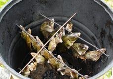 Den handgjorda rimmade fisken för breamtenchmörten röker huset Royaltyfri Foto