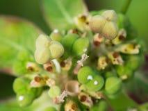 Den oönskade Flora Blooming Royaltyfri Bild