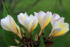 Den oavkortade blom för blommor arkivfoton