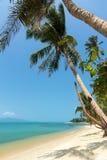 Den obebodda stranden fodrade med palmträd på Koh Samui, Thailand Arkivbilder