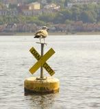Den oförskräckta fågeln behandla som ett barn seagullfaratecknet Royaltyfri Bild