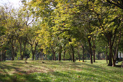 Den offentliga morgonen parkerar landskapsikt Fotografering för Bildbyråer