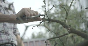 Den okända mannen klipper de gamla filialerna med pruneren i trädgården åkerbruk comcept längd i fot räknat 4k Röd kamera royaltyfria foton