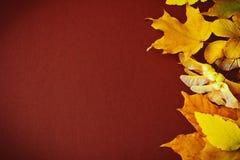 Den olika hösten lämnar Arkivfoton