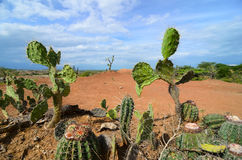 Den olika kaktuns skriver closeupen i ljus orange terräng av den Tataccoa öknen Arkivfoto