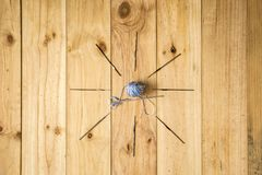 Den olika sömnaden bearbetar, inklusive sax, ulltrådar och visare på ljus wood bakgrund Royaltyfri Foto