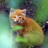 Den olyckliga ljust rödbrun kattungen arkivfoto