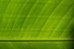 Den omvända sidan av ett tropiskt blad, slut gör sammandrag upp Arkivfoto