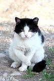 Den onda katten uppfann något sitter Fotografering för Bildbyråer
