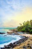 Den orörda tropiska stranden med gömma i handflatan i Mirissa Arkivfoton