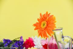 Den orange gerberatusenskönablomman i exponeringsglaskrus på färgrika blommor fjädrar att blomma för sommar royaltyfri foto